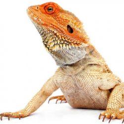 The Lizard Brain in Relationships